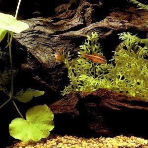 Корм для аквариумных рыб: чем, как и сколько нужно кормить рыбок. 130 фото корма и видео его применения