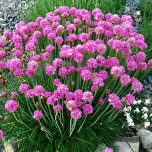 Венки из цветов