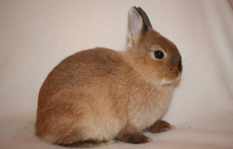 Все болезни кроликов и их лечение