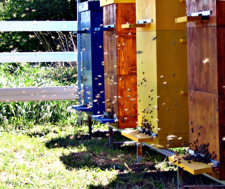 Пчелиный улей своими руками: чертежи и инструкция по изготовлению