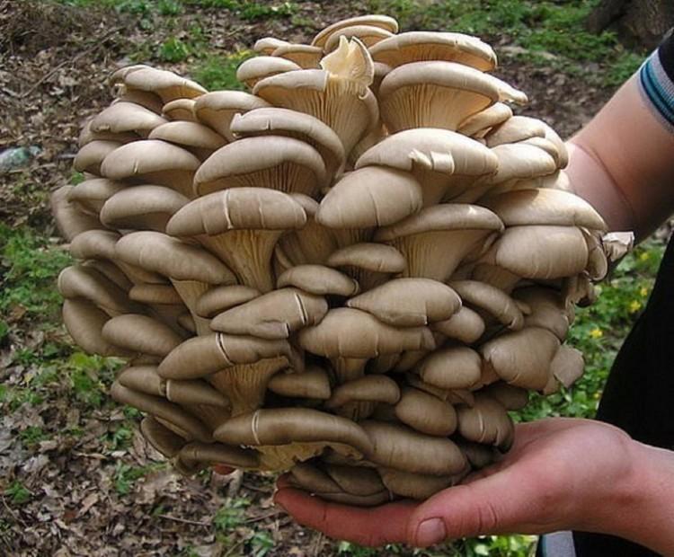 Как выращивать грибы в домашних условиях курс для начинающих?