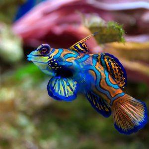 Фото аквариумных рыб с названиями и описанием особенностей: 150 видов популярных рыбок
