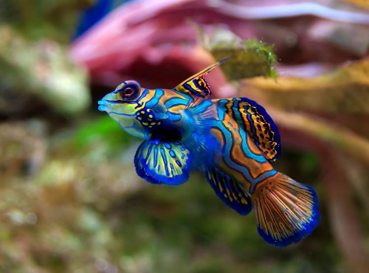 рыба аквариумная фото с названиями