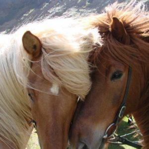 Фото лошадей: самые красивые породы, основы коневодства и правила содержания лошадей