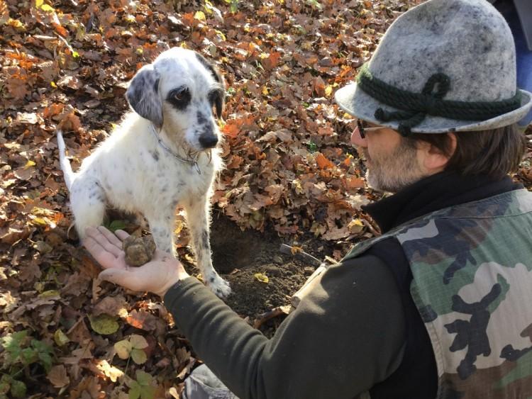 Где растёт гриб трюфель в России: фото и описание, как найти трюфель в лесу