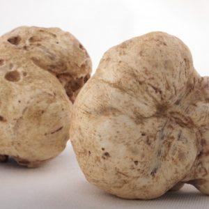 Где растут трюфели: описание гриба, виды, места роста, особенности поиска и советы как найти настоящий трюфель? (100 фото и видео)