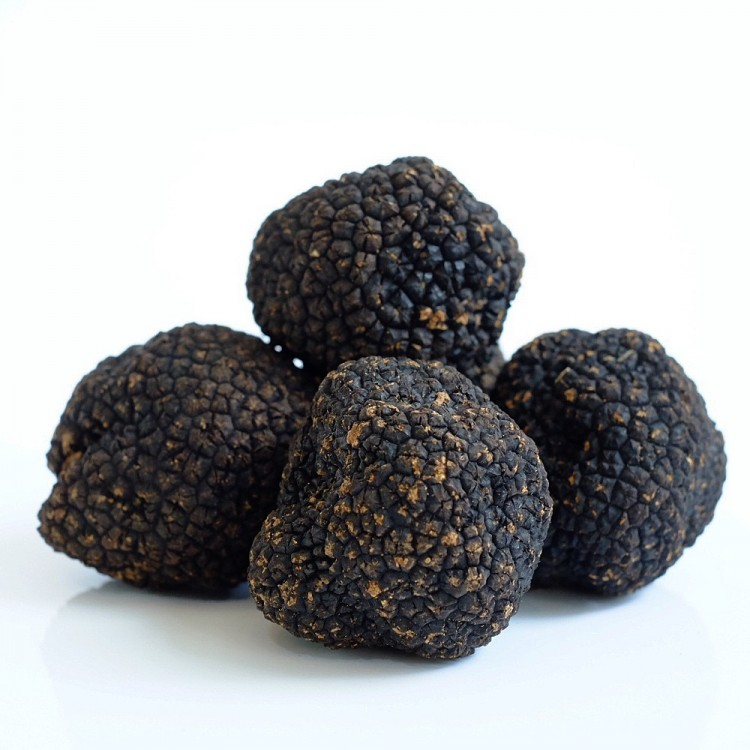 Гриб черный трюфель - стоимость, особенности выращивания и существующие виды (145 фото)