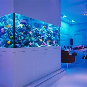 Как выбрать аквариум: советы как правильно выбрать размер, материал и форму. Необходимое оборудование для аквариумов (100 фото)
