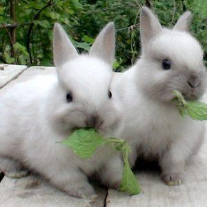 Кормление кроликов и их содержание: правильный рацион питания и организация питания (85 фото и видео)