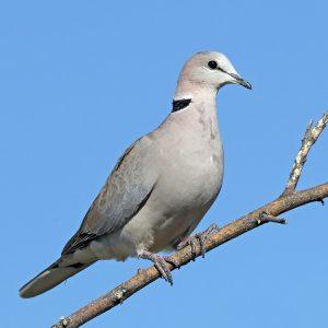 Лечение голубей — основные болезни, их симптомы, способы и методы лечения при разведении