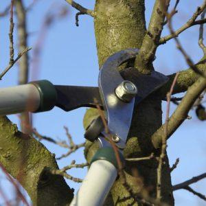 Обрезка груши: пошаговая инструкция для новичков по правильному формированию кроны груши (120 фото)