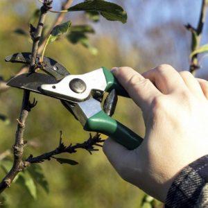Обрезка вишни — пошаговая инструкция для начинающих как правильно формировать крону вишни (110 фото)