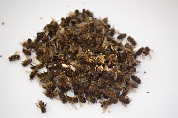 подмор пчел для похудения отзывы