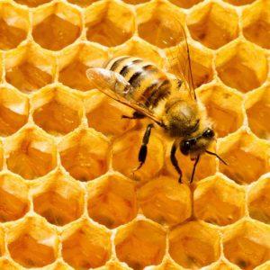 Пчелиный воск: состав, химические свойства, производство и потребление. 105 фото пчелиного воска и варианты его использования