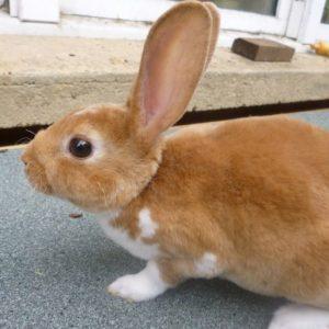 Разведение кроликов: выгодно или нет? Бизнес-план и советы начинающим как заработать на кроликах (120 фото + видео)