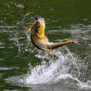 Разведение рыбы: организация и основы успешного бизнеса. Как выращивать рыбу в домашних условиях (95 фото + видео)