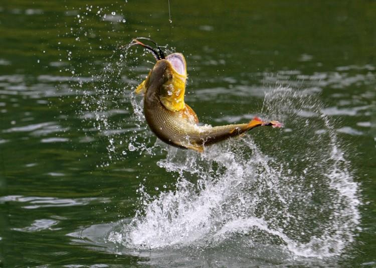 ВидеоРазведение рыбы как бизнес
