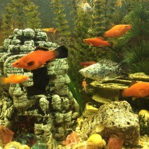 Рыбки в домашних условиях: правила содержания и советы по разведению аквариумных видов рыб (85 фото)