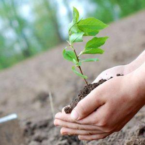 Саженцы плодовых деревьев: советы по выбору, посадке и выращиванию фруктовых деревьев (видео инструкция + 110 фото)