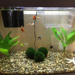 Содержание аквариумных рыбок: правила, нормы, рекомендации и советы новичкам (140 фото и видео)