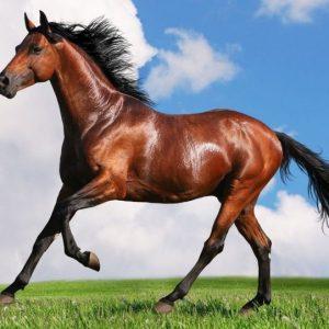 Содержание лошадей — способы, организация, системы, нормативы, правила и советы по уходу (105 фото)