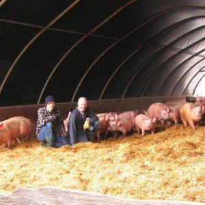 Свинарник своими руками — строительство, обустройство и проводка коммуникаций для самодельного свинарника