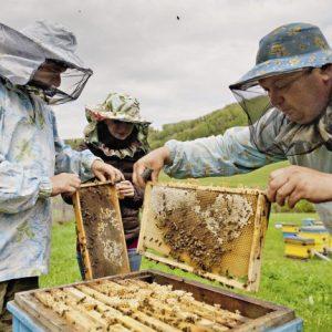 Уход за пчелами: советы и рекомендации профессионалов, основные правила содержания и рекомендации при разведении