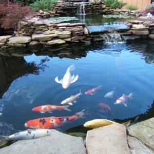 Выращивание рыбы — организация бизнеса, условия содержания и особенности рыбного промысла в домашних условиях (115 фото)