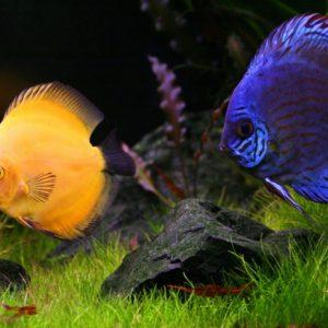 Виды аквариумных рыбок: 150 фото самых популярных и уникальных обитателей аквариумов