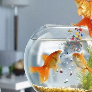 Кормление рыб: нормы, выбор корма и приспособления для кормежки популярных видов рыб (95 фото)