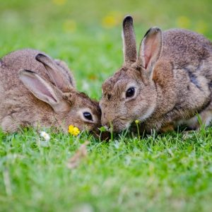 Породы кроликов: описания, названия, характеристики, особенности и правила выращивания (100 фото и видео)