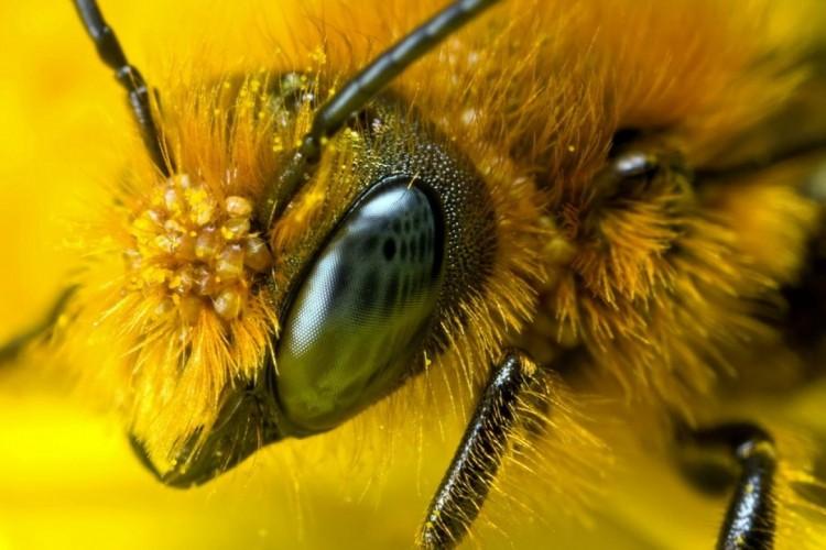 Пчелотерапия лечение пчелами