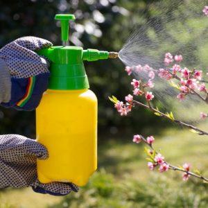 Обработка яблонь — советы по избавлению от вредителей, сроки, интенсивность и подбор удобрений (100 фото и видео)