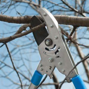 Обрезка яблони: как и когда правильно обрабатывать яблони. 105 фото и видео описание техники обрезки фруктового дерева