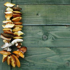 Как правильно сушить дома грибы